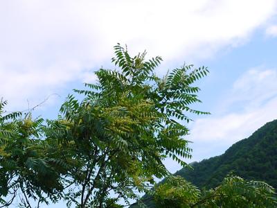 sawagurumi